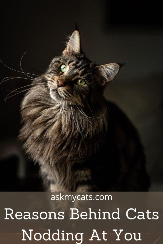 Reasons Behind Cats Nodding At You