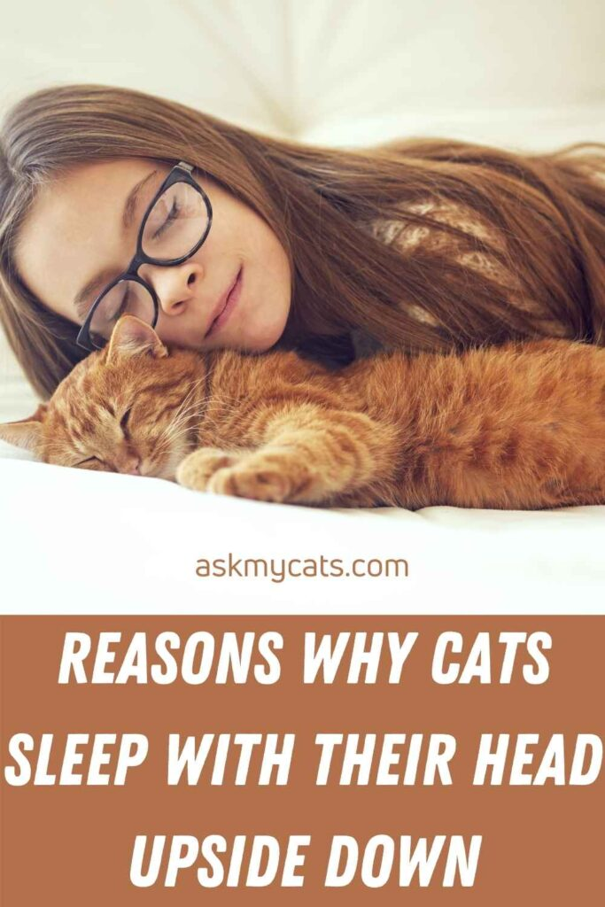 Reasons Why Cats Sleep With Their Head Upside Down