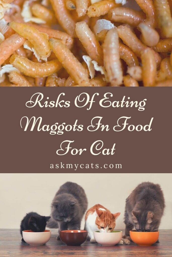 Risks Of Eating Maggots In Food For Cat