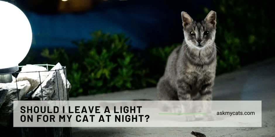 Should I Leave A Light On For My Cat At Night