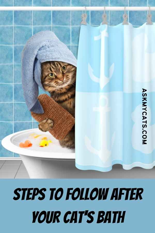 Steps To Follow After Your Cat's Bath