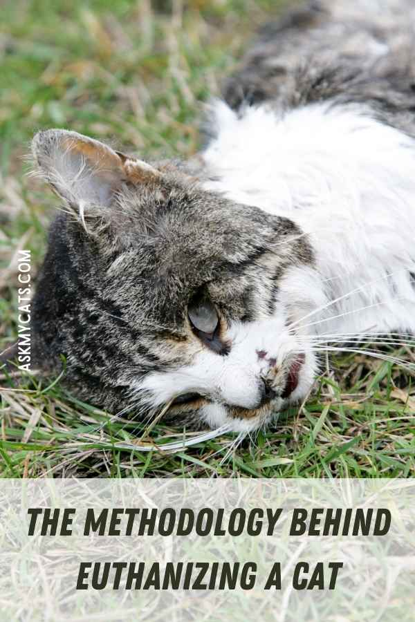 The Methodology Behind Euthanizing A Cat