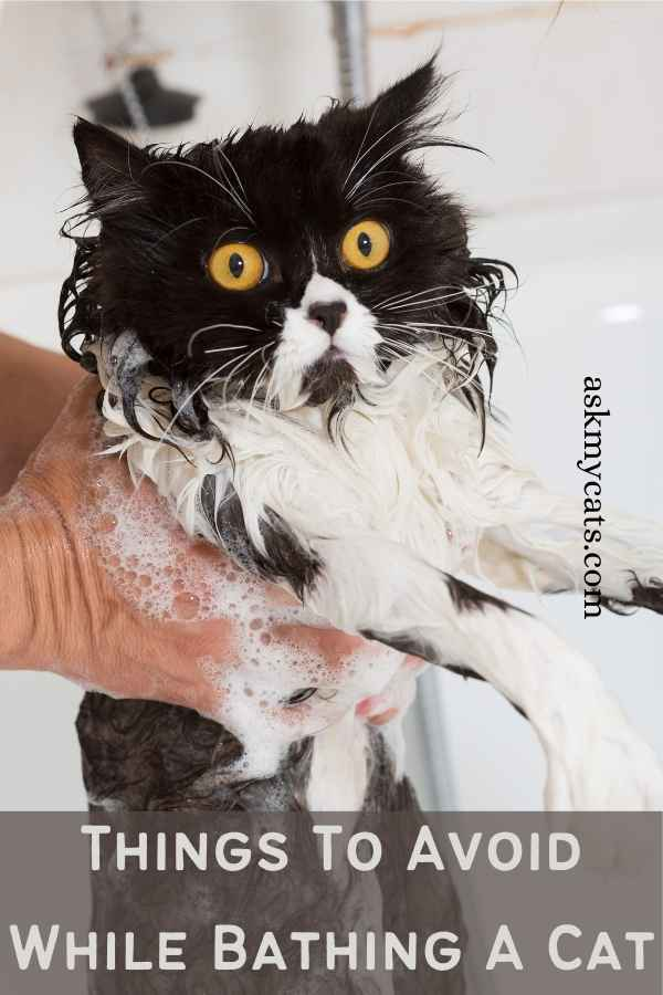 Things To Avoid While Bathing A Cat
