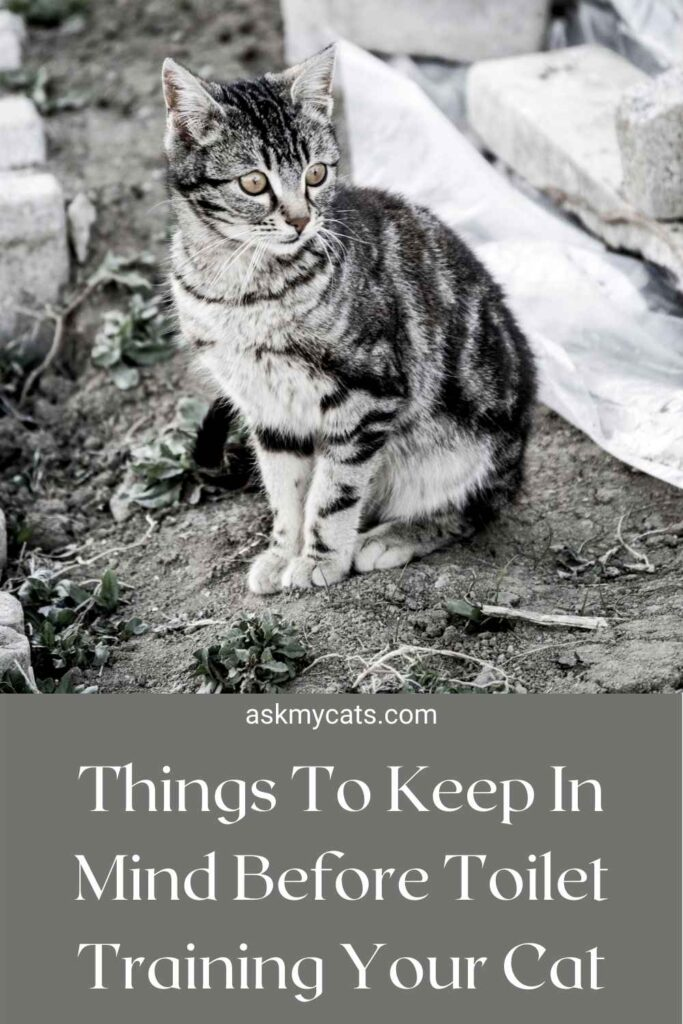 Things To Keep In Mind Before Toilet Training Your Cat