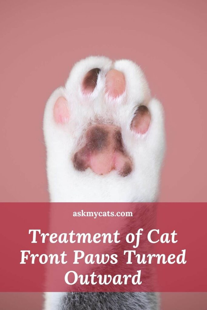 Treatment of Cat Front Paws Turned Outward