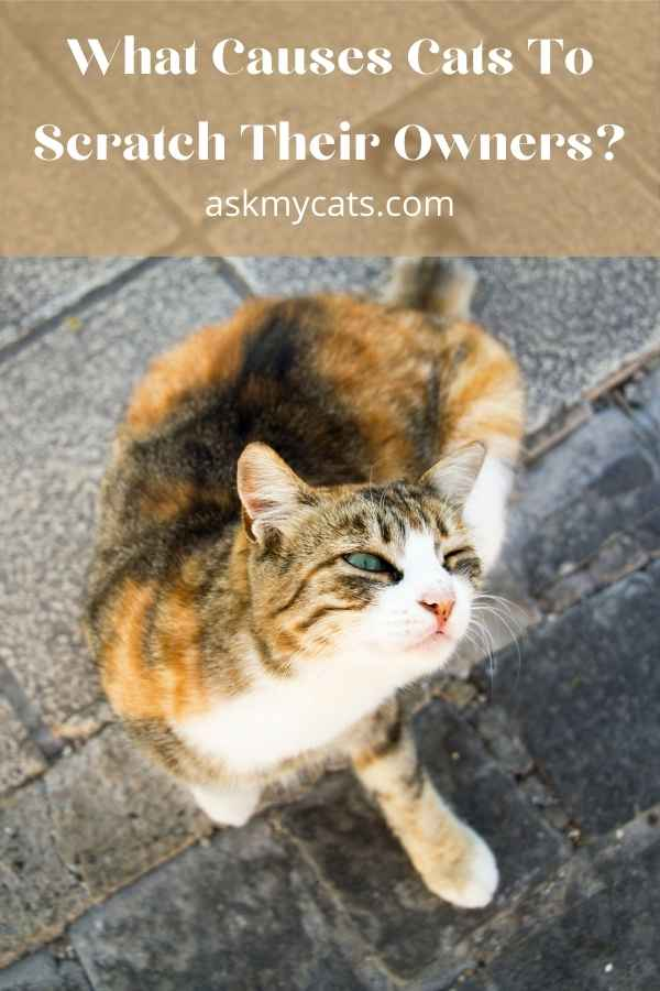 What Causes Cats To Scratch Their Owners?