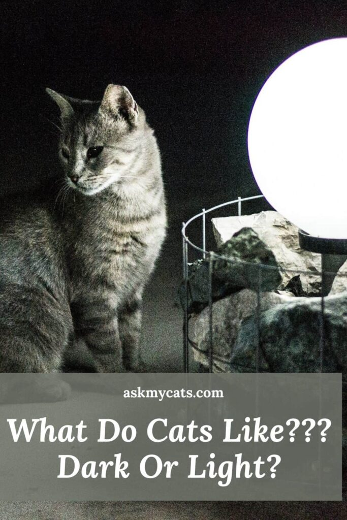 What Do Cats Like - Dark Or Light