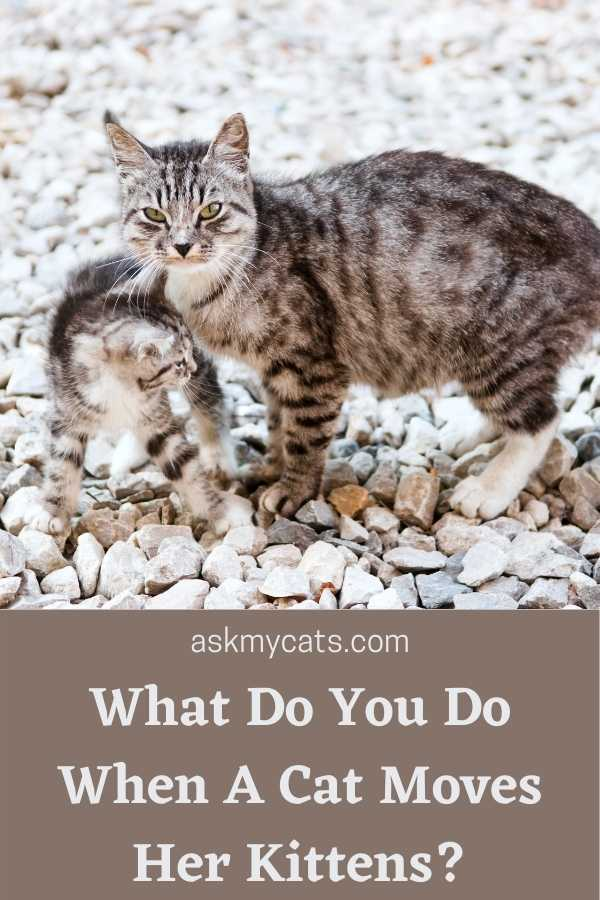What Do You Do When A Cat Moves Her Kittens?