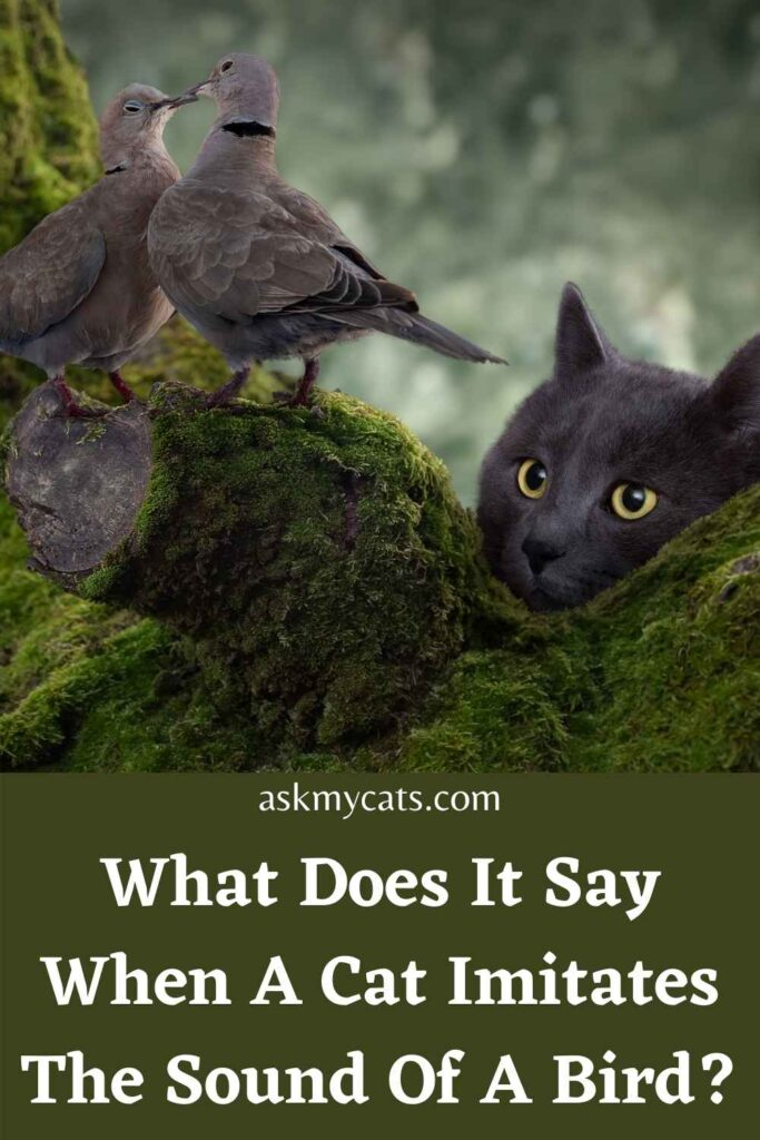 What Does It Say When A Cat Imitates The Sound Of A Bird?