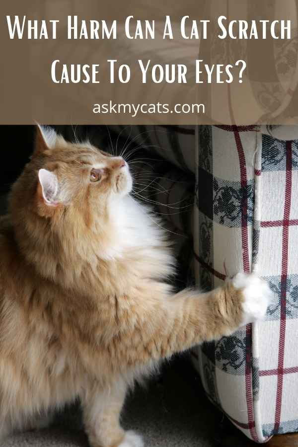 What Harm Can A Cat Scratch Cause To Your Eyes?