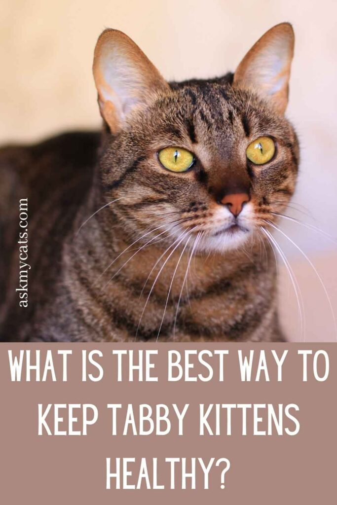What Is The Best Way To Keep Tabby Kittens Healthy?