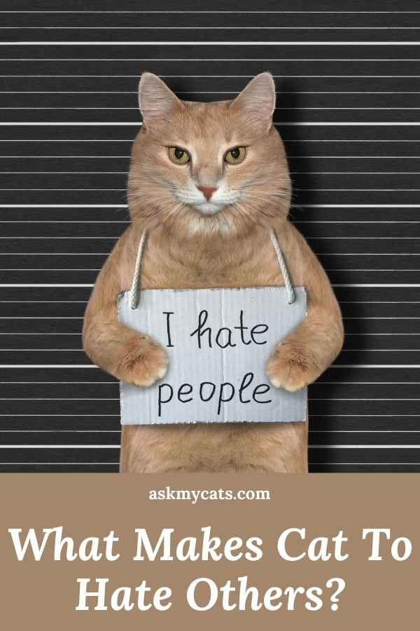 What Makes Cat To Hate Others?