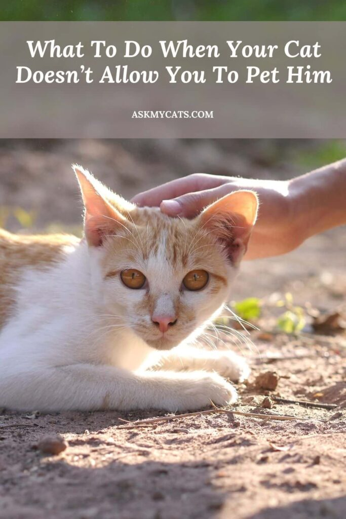 What To Do When Your Cat Doesn't Allow You To Pet Him
