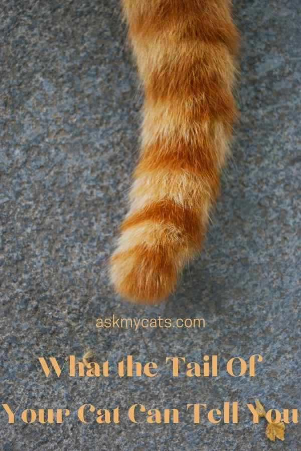 What the Tail Of Your Cat Can Tell You