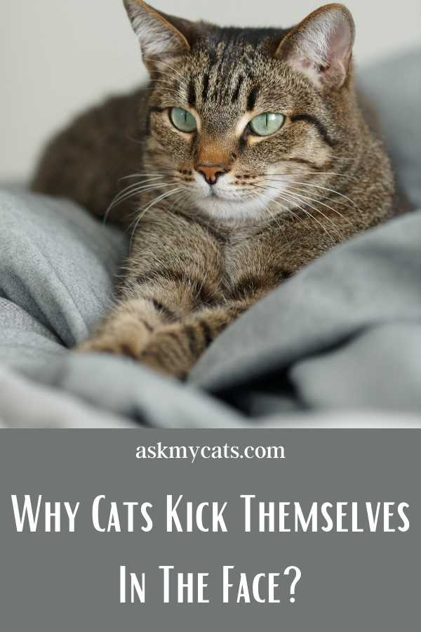 Why Cats Kick Themselves In The Face?