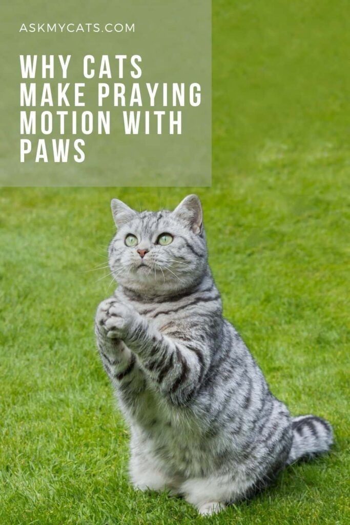 Why Cats Make Praying Motion With Paws