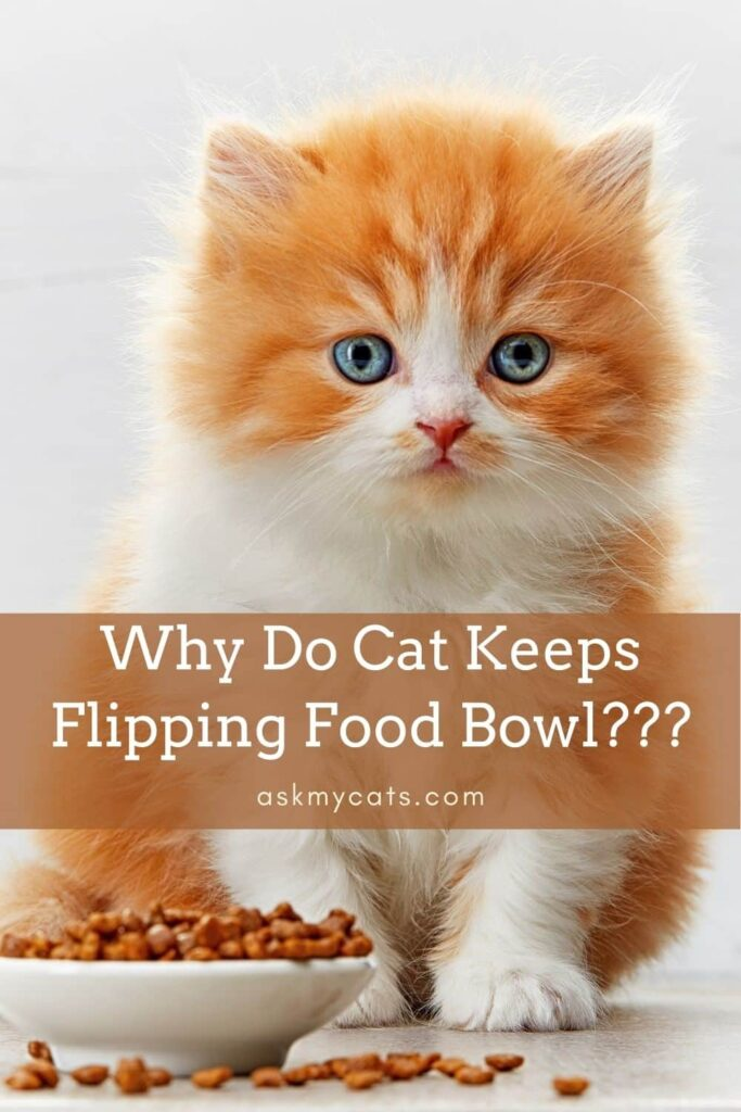 Why Do Cat Keeps Flipping Food Bowl