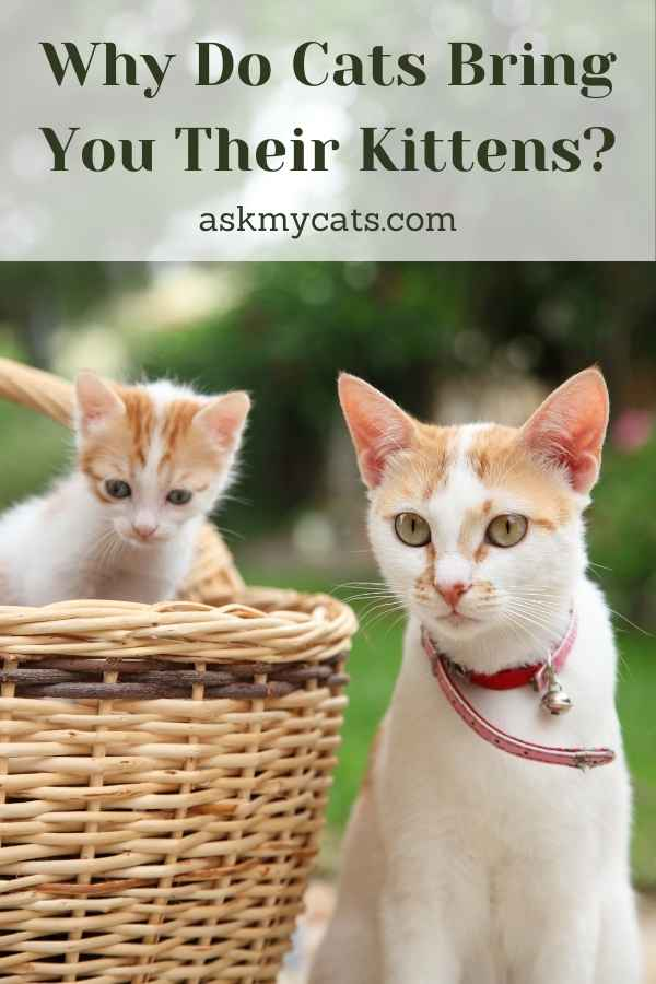 Why Do Cats Bring You Their Kittens?