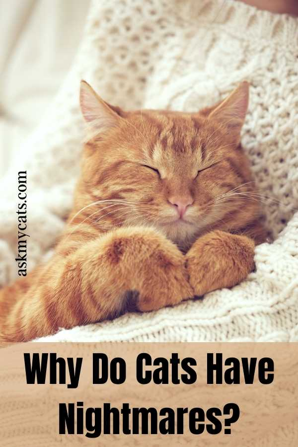 Why Do Cats Have Nightmares?