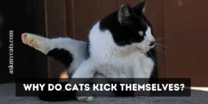 Why Do Cats Kick Themselves? Take A Look At These Funny Reasons!