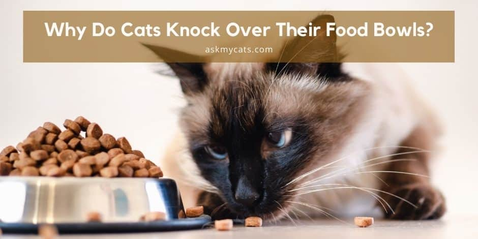 Why Do Cats Knock Over Their Food Bowls