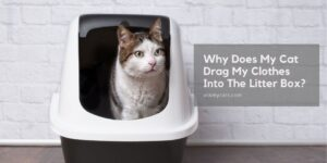 Why Does My Cat Drag My Clothes Into The Litter Box? 9 Mind-Boggling Reasons!