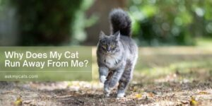 Why Does My Cat Run Away From Me? How To Change This Behaviour?
