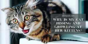 Why Is My Cat Hissing And Growling At Her Kittens? Know These Reasons