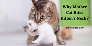 Mother Cat Biting Kitten's Neck? Know The Potential Reasons Behind It!