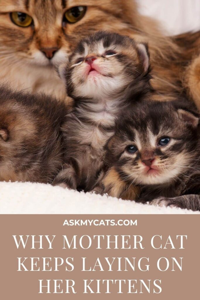 Why Mother Cat Keeps Laying On Her Kittens