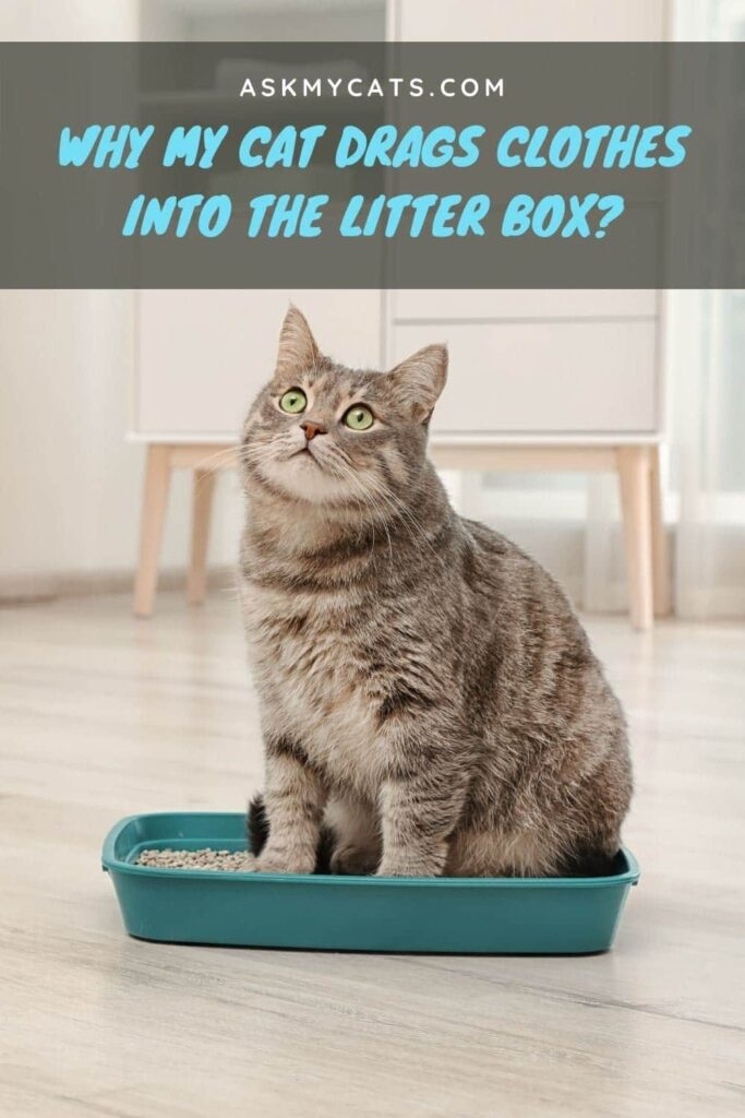 Why My Cat Drags Clothes Into The Litter Box