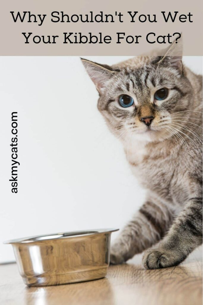 Why Shouldn't You Wet Your Kibble For Cat