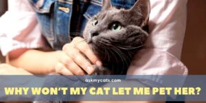 Why Won't My Cat Let Me Pet Her? Know The Reasons Before You Go Wrong!