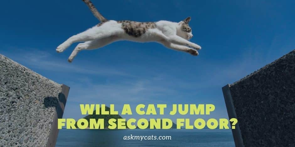 Will A Cat Jump From Second Floor