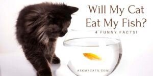 Will My Cat Eat My Fish? 4 Funny Facts!