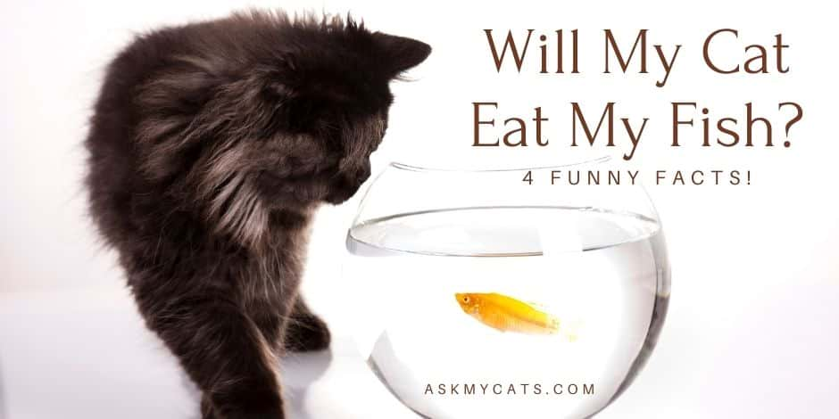 Will My Cat Eat My Fish