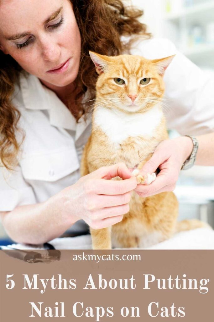 5 Myths About Putting Nail Caps on Cats