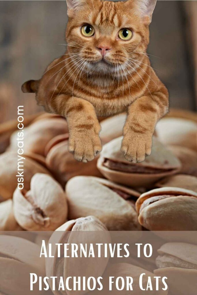 Alternatives to Pistachios for Cats