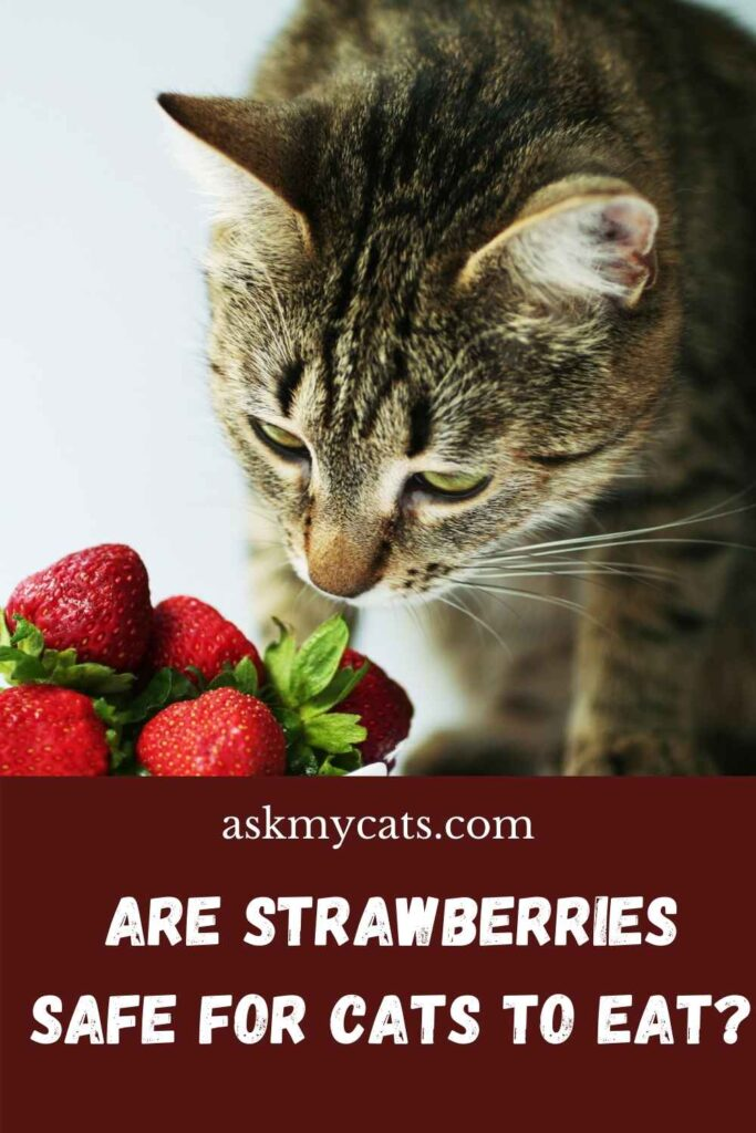 Are Strawberries Safe for Cats to Eat?