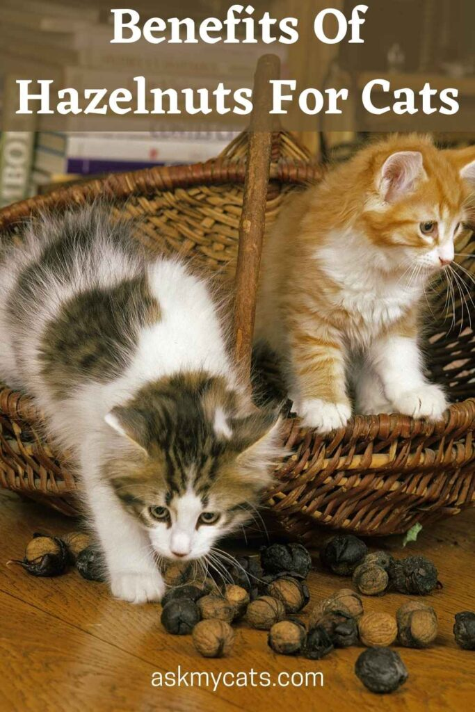 Benefits Of Hazelnuts For Cats