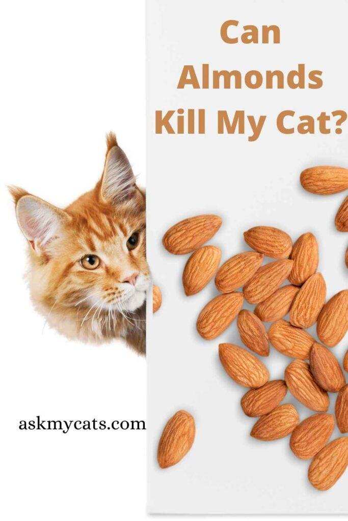 Can Almonds Kill My Cat?