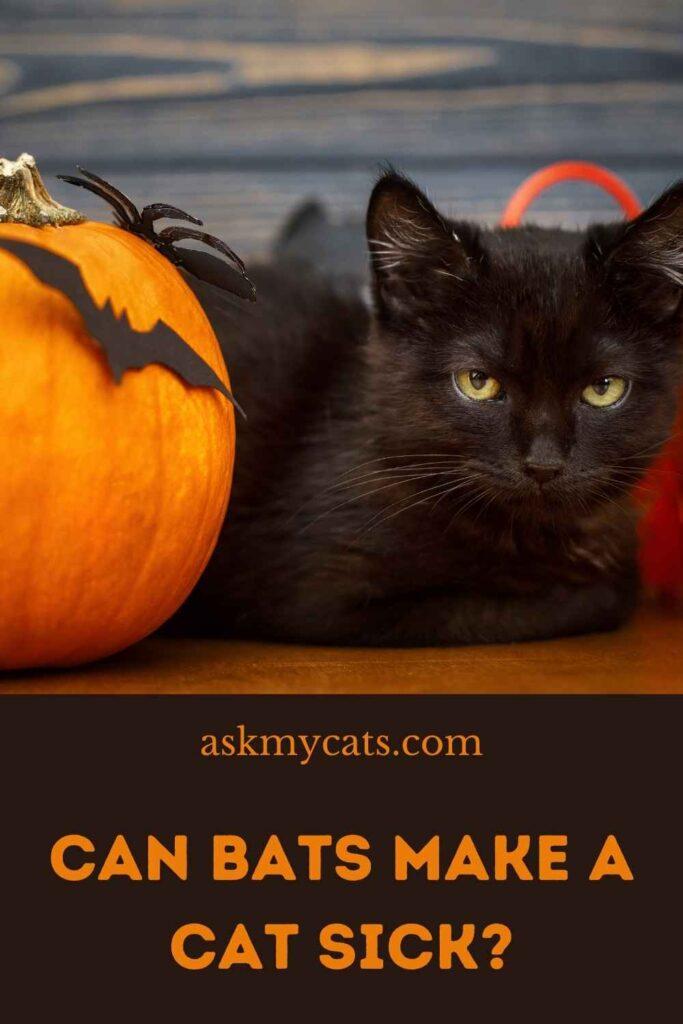 Can Bats Make A Cat Sick?