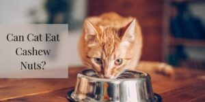 Can Cat Eat Cashew Nuts? Know The Top Reasons!