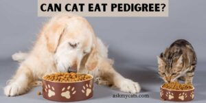 Can Cat Eat Pedigree? Know Before It Goes Wrong!