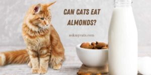 Can Cats Eat Almonds? Know All The Important Reasons!