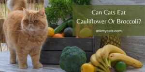 Can Cats Eat Cauliflower Or Broccoli? Is It Safe For Them?