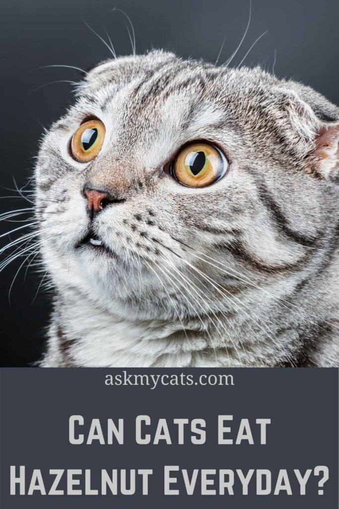 Can Cats Eat Hazelnut Everyday?