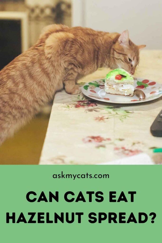 Can Cats Eat Hazelnut Spread?