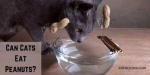 Can Cats Eat Peanuts? Check All The Probable Reasons!
