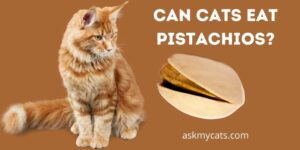 Can Cats Eat Pistachios? Know All The Reasons!